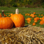Pumpkin – It's not just for Halloween and pies